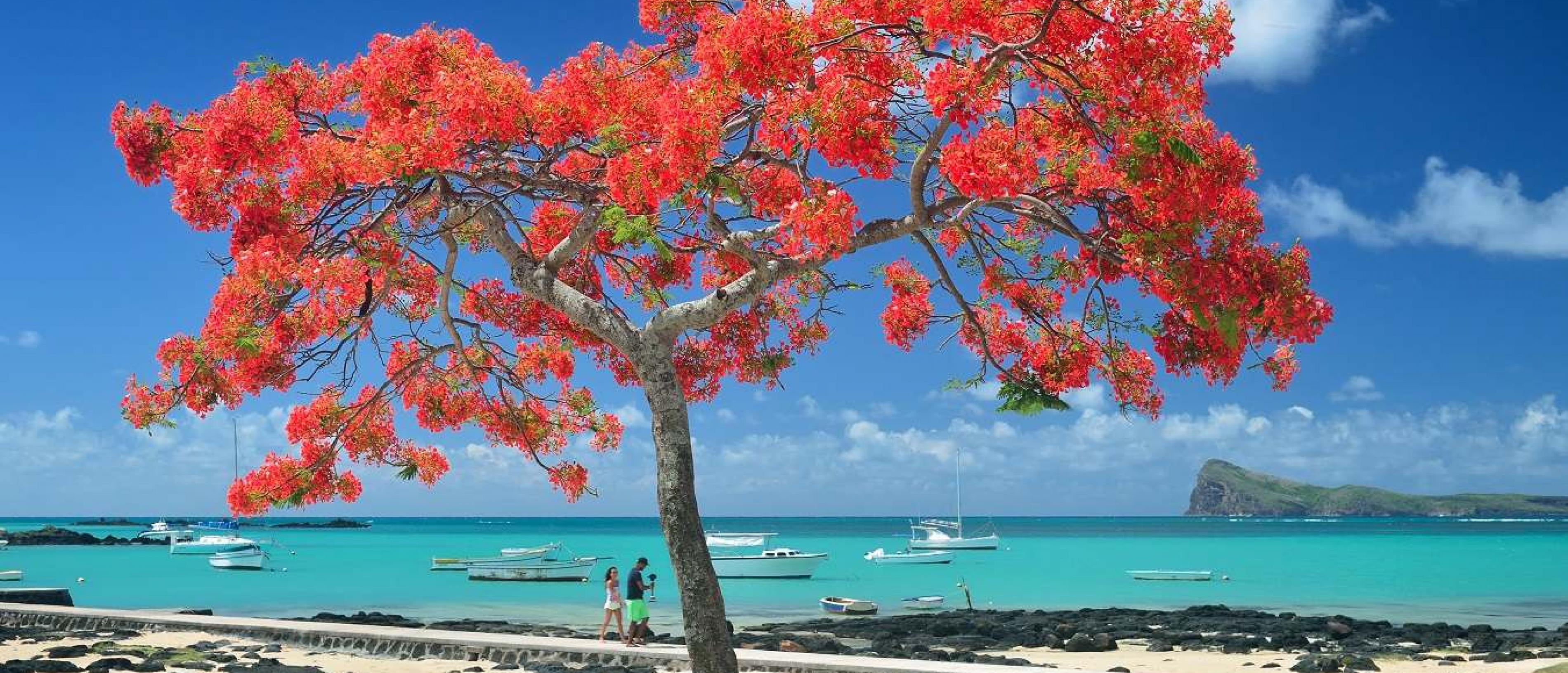 Нова Година 2020 на остров Мавриций